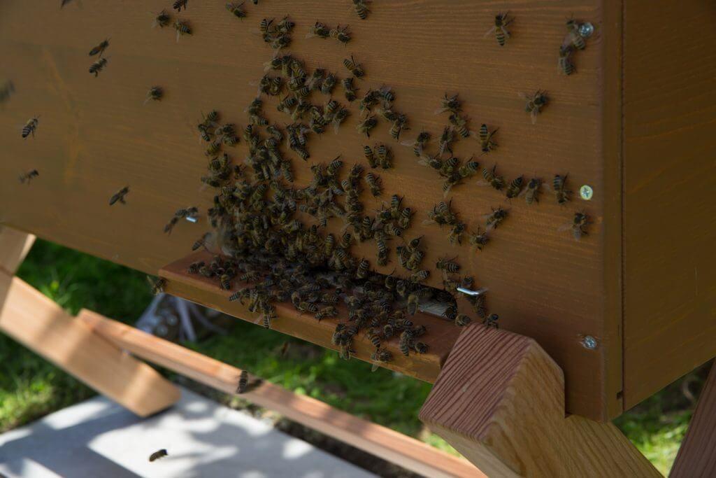 Die BienenBox von Stadtbienen e.V. bei Topgres
